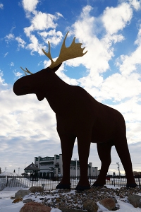 Mac the Moose, positioned on the south side of the Trans Canada Highway at the eastern outskirts of Moose Jaw; greets visitors and draws attention to the local travel information center.