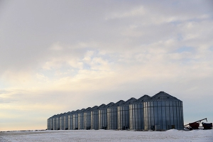Metal temporary grain storage bins have long replaced the wooden structures from the 19th and early 20th centuries. Each bin this size has a storage capacity of approximately 50.000 bushels. (1 bushel = 22.7 kg of canola) Using the main crop in the area as an example each bin contains 1,136,363 kg. 1 acre (4,046 square meters) yields 33.7 bushels (765 kg)