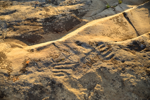 The initial human foot print has been transformed into a grizzly's paw through the addition of long claws. Such change in a carving supports the speculation that more than one native group frequented the petroglyph site. Adding and overlapping markings was a way to leave a mark for generations that followed.  Grizzly paw petroglyphs are unique to this sandstone slab site in Saskatchewan. Black bear paws have been identified in the Woodlands Region of Northern Saskatchewan. The St. Victor site remains the only site on the plains that bears witness to a grizzly bear population.