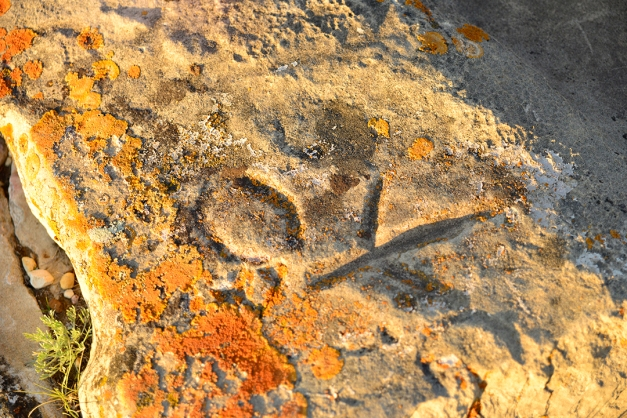 Another lichen encrusted area of the sandstone slab depicts a bird in flight placed just below the cloven hoof imprint. Both of these carvings are deep and were much easier to detect in the golden light of the sunset. Cloven hoof markings depicting elk, deer and particularly buffalo tracks are prominent on the St. Victor Petroglyph site, paying tribute to the hunter gatherer societies roaming the prairies long before the first European settlers arrived and claimed their stake.