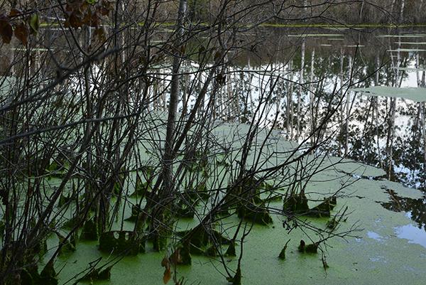 pond shoreline