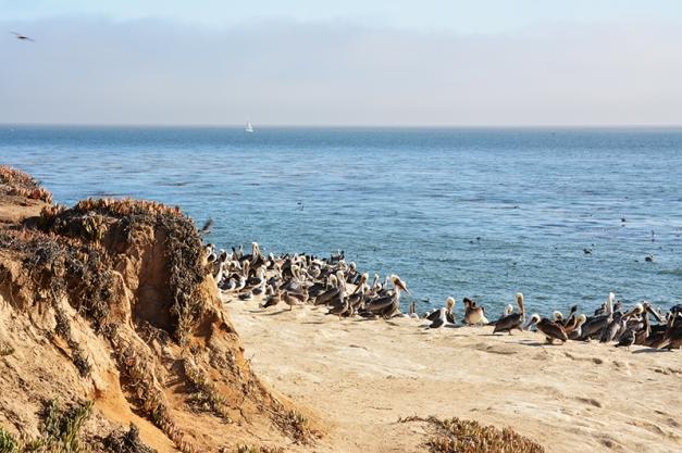 002_Pelican rookery