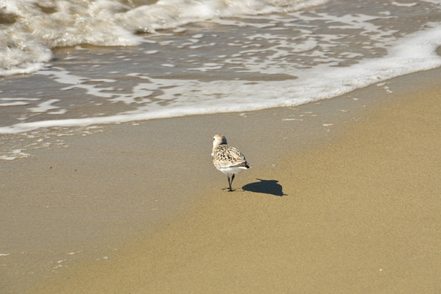Time to redirect my attention. And there it was - the focus I needed, a lone Sandpiper out for his daily beach stroll.
