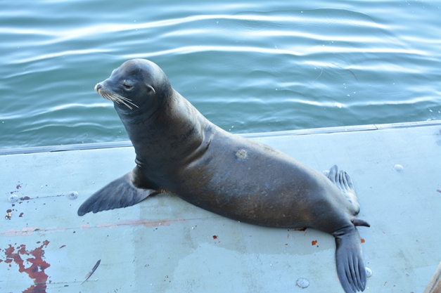 028_seal portrait