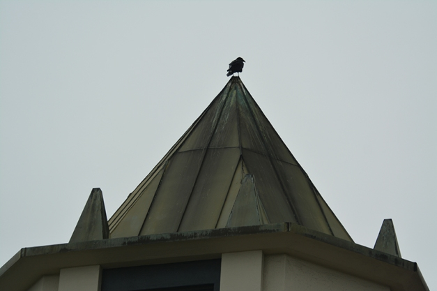 38_raven on peak