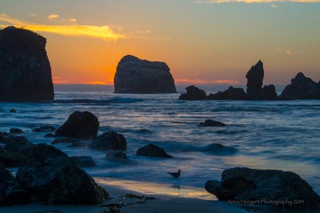 Sand Dollar Beach California