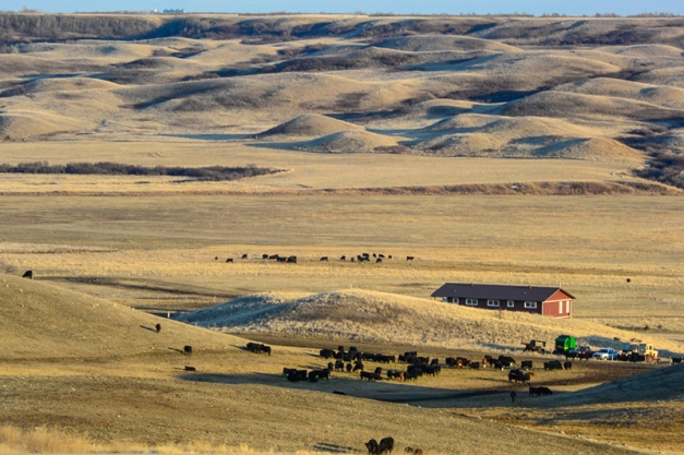 Calving Time in the Qu'Appelle Valley, SK NikonAW1, Nikkor 28-300mm@85mm, ISO 160, f/18, 1/8sec, hand-held.