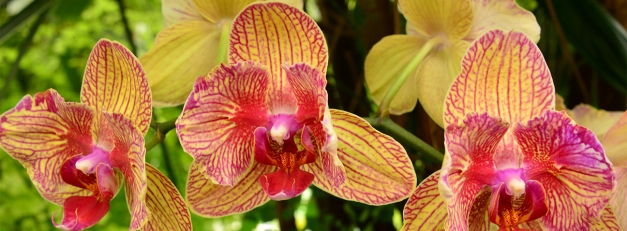 orchids header