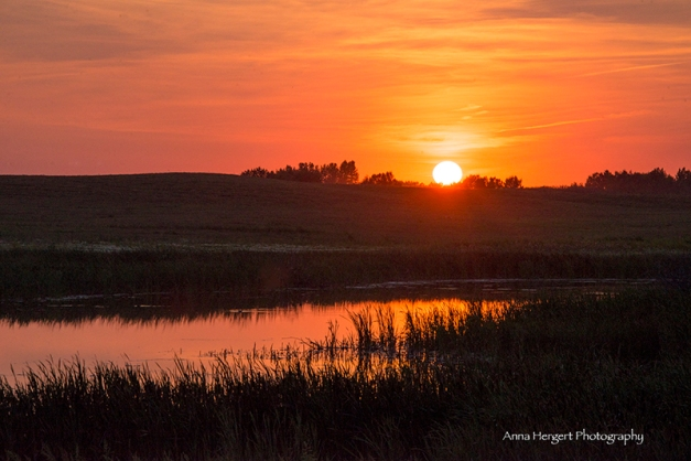 Always Awe Inspiring... A Prairie Sunset Nikon D610, Nikor 28-300mm@250mm, ISO 400, f/16, 1/640s, hand-held.