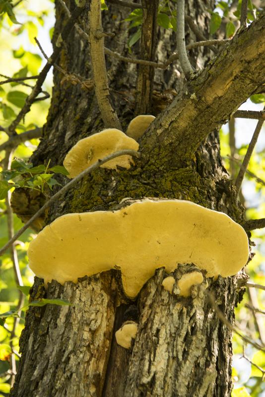 tree funghi