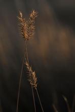 Grasslands detail 5