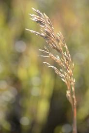 Grasslands detail