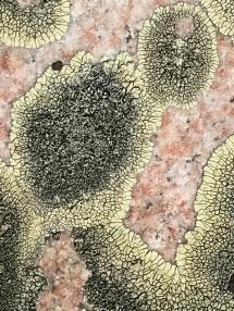 Lichen growth 1