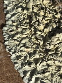 Lichen growth 2